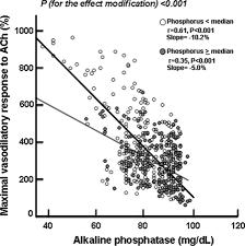 Serum Alkaline Phosphatase Negatively Affects Endothelium