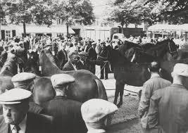 Paardenmarkt Hash Tags Deskgram