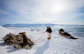 the seal hunters of greenland a photo essay hakai magazine aquingwak a skilled hunter stops his sled at the edge of the sea ice to patiently untangle the leads