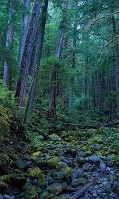 forest hd live wallpaper apk full. 3d forest hd live wallpaper 1.0 screenshot 5 hd apk full o