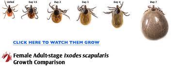 Tick Size Chart Tick Growth Comparison