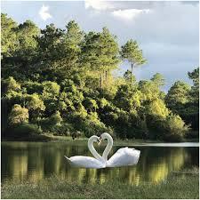 Nature Trees Swan Beauty iPad Wallpaper ...