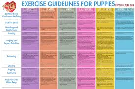 Puppy Culture Exercise Poster By Madcap Productions Issuu