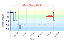 Ideal Sleep Cycle Chart What Happens When You Sleep