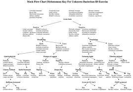 Dichotomous Flow Chart Microbiology Flow Chart For Unknown In Microbiology Microbiology