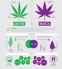 Indica Sativa Hybrid Chart Indica Vs Sativa High Difference Fv Kasa