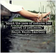 wisdom from ralph waldo emerson inspiring quotes simple life  patience quote