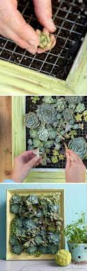 24 of the most beautiful ideas on indoor mini garden to collect homesthetics 7