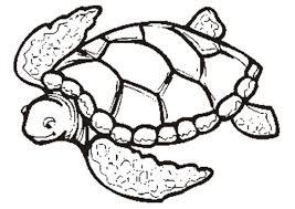 Small Picture 944 Best Tmnt Images On Pinterest Teenage Mutant Ninja Turtles