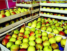 Control Of Ethylene In Fruits Vegetables Warehouses And