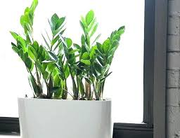 Best indoor plants for office Low Maintenance Best Indoor Office Plants Cool Office Plants Cool Indoor Plants Cool Office Plants Best Indoor Plants Tall Dining Room Table Thelaunchlabco Best Indoor Office Plants Best Indoor Plants Plants For Office