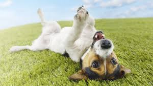 funny dog backgrounds 27 hd wallpaper funnypicture org