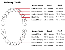 23 Months Milestones Chart Baby And Toddler Teething Help Baby Teething Chart Baby