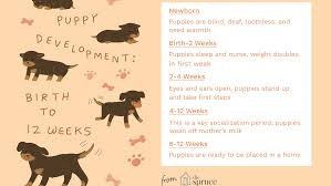 Puppy Development From 1 To 8 Weeks