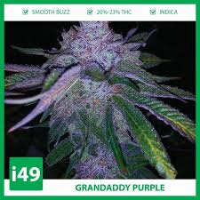Buy Grandaddy Purple Strain Seeds | Get Grandaddy Purple Strain Online | I49