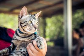 expert advice for t your cat s claws