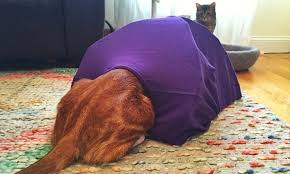 How To Make A Tent How To Make A Diy Cat Tent So Adorable Youll Wish You Could Fit In It
