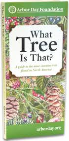 Tree Leaf Identification Chart What Tree Is That Online Edition At Arborday Org