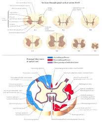 Spine Diagram Chart Schematics Online