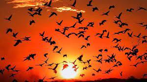 Las aves son más que simples pájaros: Conectan al mundo | Notigram
