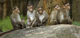 Image result for monkeys