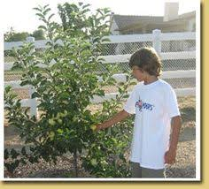 Fruit Trees U0026 Plants  Edible Garden  The Home DepotNon Gmo Fruit Trees For Sale