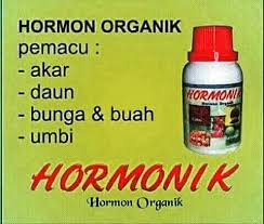 Image result for pupuk hormonik