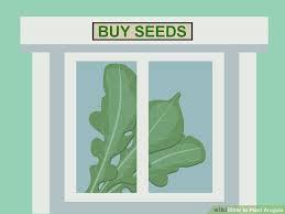 image titled plant arugula step 1