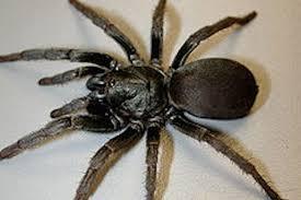 9 Common Types Of Spiders Identification Threats