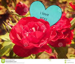 paper heart i love you on the red rose