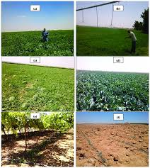 Examples On Irrigated Crops And Irrigation Practices In The Three