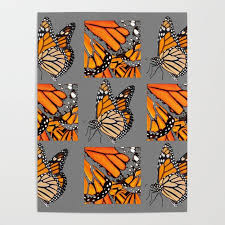 Decorative Monarch Butterfly Grey Display Chart Poster By Sharlesart