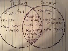 Producer And Consumer Venn Diagram Producers And Consumers Venn Diagram Magdalene Project Org