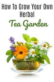 how to grow an herbal tea garden love herb tea see how simple it