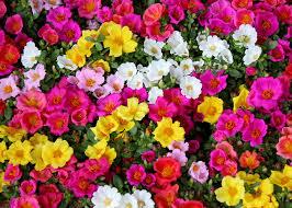 Heat Tolerant Annuals for Virginia Summers - Strange's Florists,  Greenhouses and Garden Centers - Richmond, VA