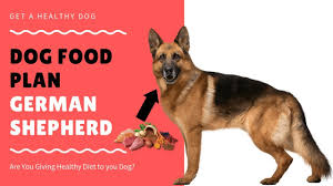 Dog Food Plan German Shepherd Dog Facts In Hindi Animal Channel Hindi