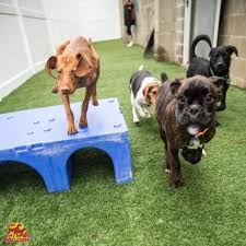 1520 martin luther king jr way, seattle, wa. Safe Fun And Caring Doggy Daycare Services The Dog Stop
