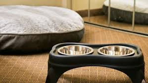 best western premier grand canyon squire inn choose one of our dedicated pet friendly rooms