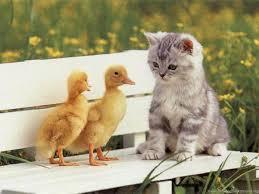 Download Cute Cute Kittens Wallpapers ...