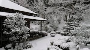 Download Japan Snow Garden 1920x1080 Hd Wallpaper And Free