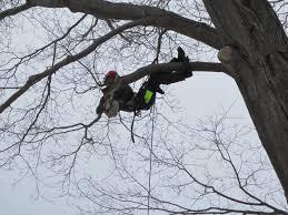 photo wallace tree service