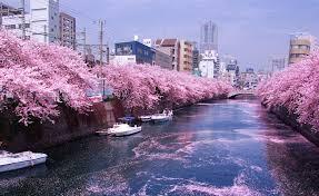 「桜無料画像」の画像検索結果