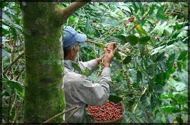 The current reserve offering is a wonderful peaberry coffee from rwanda. Pura Vida Create Good Premium Arabica Beans Beans Arabica Beans Arabica