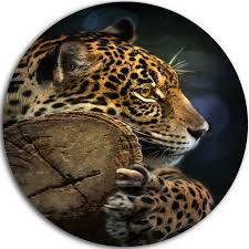 relaxing jaguar animal photography round metal wall art 11  on leopard metal wall art with relaxing jaguar animal photography round metal wall art