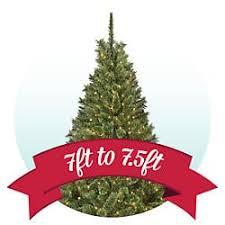 Sears The Original Charlie Brown Christmas Tree For 1049 Sear Christmas Trees