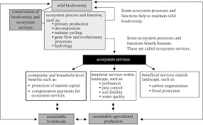 biodiversity conservation and agricultural sustainability towards figure