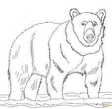 Small Picture Brown Bear Stands in Shallow Water coloring page Free Printable