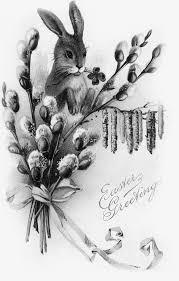 無料ダウンロードのための花枝うさぎ イカ かわいいウサギ ウサギ Png画像