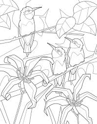 Birds Coloring Book Adult Page Gallery Colouring Sheets