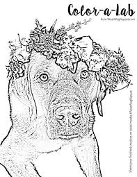 Labrador Retriever Champagne Coloring Pages Print Coloring
